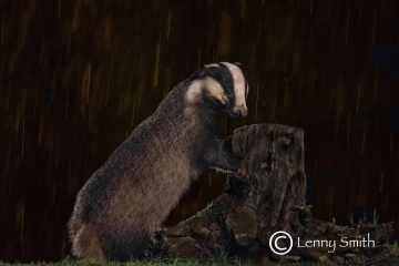 Badger by Lenny Smith